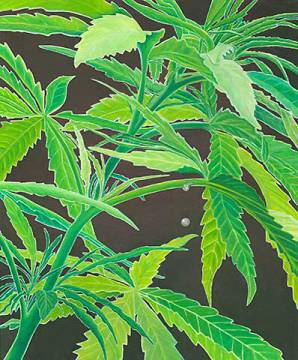 Cannabis of artist Birgitt Wolny as framed image