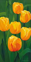 Christian - The Glorious Six (Tulips)