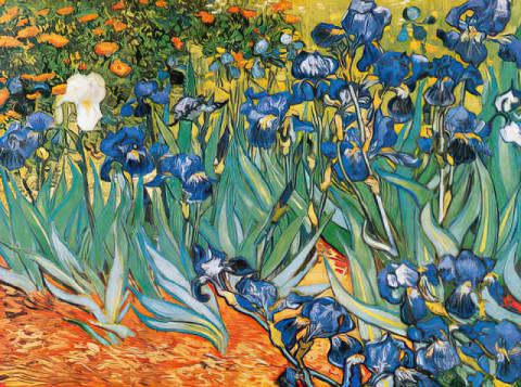 Irises in the Garden, 1889 of artist Vincent van Gogh as framed image