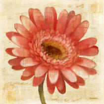 Albena Hristova - Blushing Gerbera on Cream