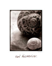 Sue Schlabach - New Discoveries