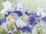 Maud Durland - Purple Irises, 2000