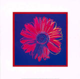Daisy, c.1982 (blue and red) von Andy Warhol
