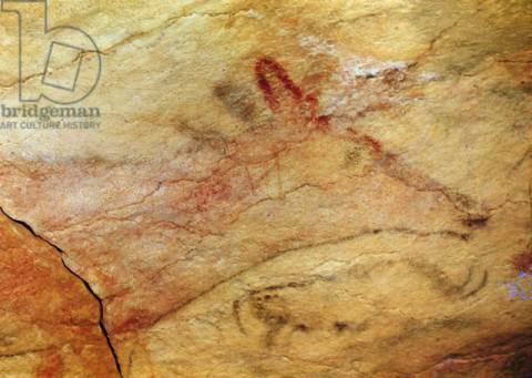 Kunstdruck: Prehistoric, Detail of Stag from the Caves of Altamira, c.15,000 BC