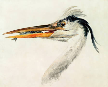 Kunstdruck, individuelle Kunstkarte: Joseph Mallord William Turner, Heron with a fish
