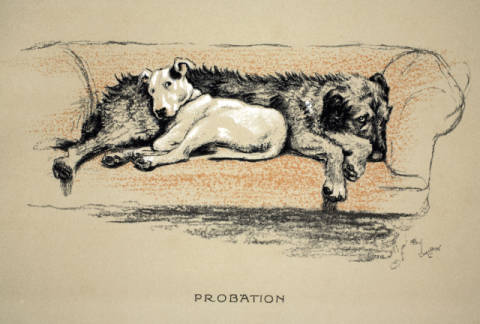 Probation, 1930, 1st Edition of 'Sleeping Partners', Aldin, Cecil Charles Windsor (1870-1935), published by  Eyre and Spottiswoo von Künstler Cecil Charles Windsor Aldin als gerahmtes Bild