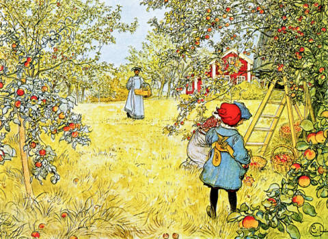 Kunstdruck, individuelle Kunstkarte: Carl Larsson, The Apple Harvest