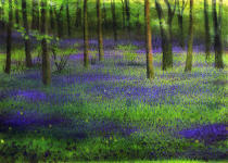 Edward Clifford - Bluebell Wood