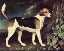 George Townley Stubbs - Ringwood, a Brocklesby Foxhound, 1792