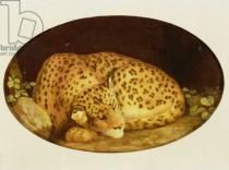 George Townley Stubbs - Sleeping Leopard, 1777