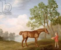 George Townley Stubbs - Pumpkin with a Stable-Lad, 1774