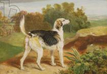 James Ward - Ravager, one of the Lambton Hounds