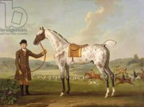 Thomas Spencer - Scipio, Colonel Roche's Spotted Hunter, c.1750