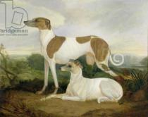 Charles Hancock - Two Greyhounds in a Landscape