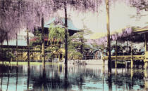 Japanese Photographer - Wisteria blossom over the pond in the Kameido Temple Gardens, Tokyo, late 19th century