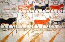 Egyptian 19th Dynasty - The seven celestial cows and the sacred bull and the four rudders of heaven, from the Tomb of Nefertari, New Kingdom