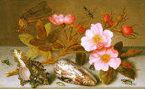 Balthasar van der Ast - Still life depicting flowers, shells and a dragonfly