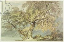Joseph Mallord William Turner - A Great Tree, c.1796
