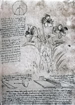 Leonardo da Vinci - Studies of Violas , fol. 14r from Manuscript B, c.1487-90