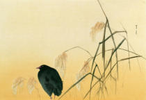 Japanese School - Blackbird, Edo Period