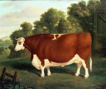 Thomas Roebuck - Ox, c.1850