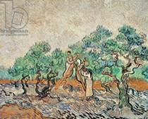 Vincent van Gogh - The Olive Grove, 1889
