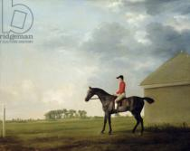 George Townley Stubbs - Gimcrack with John Pratt up on Newmarket Heath, 1765