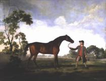 George Townley Stubbs - The Duke of Ancaster's bay stallion 'Spectator', held by a groom, c.1762-5