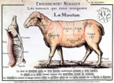 Mutton: diagram depicting the different cuts of meat of French School