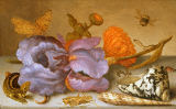 Balthasar van der Ast - Still life depicting flowers, shells and insects