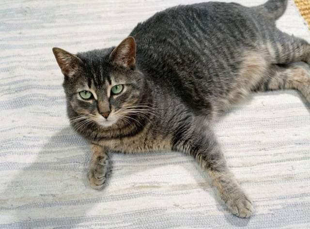 Foto Kunstdruck Katze Innen Tigerkatze Hauskatze Von Prisma F1 Online Auf Glossy Normal