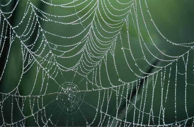 Andreas Pulwey Netz Tau Tautropfen Spinnennetz Spinnweben Kunstdruck