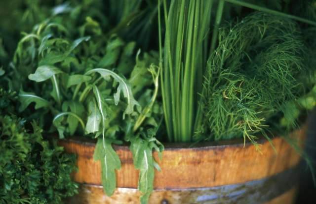 Owi Diasign Blumentopf Pflanzen Kräuter Ernährung Detail Kunstdruck