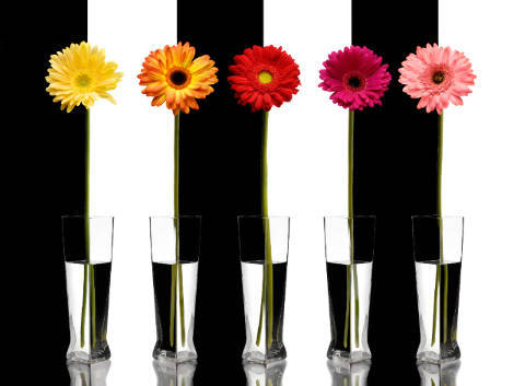 Foto-Kunstdruck: All Canada Photos (F1 Online), Illusionen, Optische Illusion, Brechung, Gerbera, Illusion