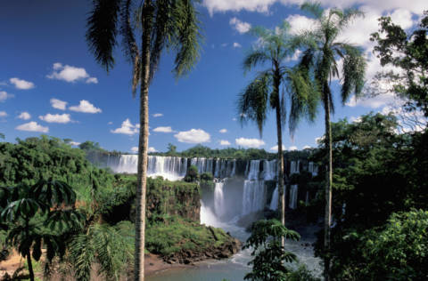 Parque National do Iguazu, Cataratas do Iguazu, Iguazu Waterfalls, Foz do Iguazu, Parana, Brazil, South America, waterfall, palm von Künstler Prisma (F1 Online) als gerahmtes Bild