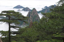 S. Tauqueur (F1 Online) - Huangshan, Anhui