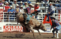 All Canada Photos (F1 Online) - Reitender Bulle, Calgary-Massenansturm, Rodeo, Kerle