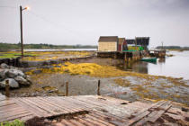 All Canada Photos (F1 Online) - Seetang, Lunenburg