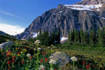 All Canada Photos (F1 Online) - Halterung Edit Cavell, Mt Edith Cavell