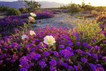 All Canada Photos (F1 Online) - Anza Borrego Desert, Staats-Park