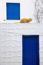 First Light (F1 Online) - Cat on wall of typical building, Hora, Mykonos Island, Cyclades, Greece