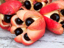 First Light (F1 Online) - Close-up of fresh, ripe ackee, Kingston, Surrey, Jamaica