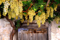 M. De Ganck (F1 Online) - Grapes growing on an old house facade, Rhodes, Greece, close-up