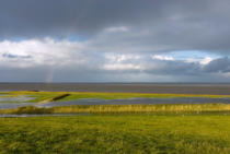 Norbert Hohn  (F1 Online) - Salt marsh at Fedderwardersiel, Germany