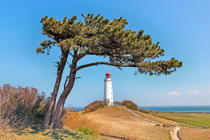 Paul Steeger (F1 Online) - Hiddensee, Leuchtturm mit Kiefer