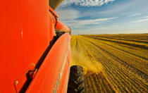 First Light (F1 Online) - Combine harvesting oats, near Dugald, Manitoba, Canada