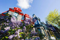 First Light (F1 Online) - Lilac and coloured houses, Square Saint-Louis, Montreal, Quebec
