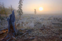 First Light (F1 Online) - A foggy autumn sunrise on a hoar frost covered pasture in central Alberta, Canada