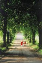 Tiofoto (F1 Online) - Tree-Lined, Liebling, Begleitung, Nur Kinder