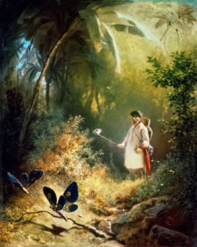 The Butterfly Catcher of artist Carl Spitzweg as framed image